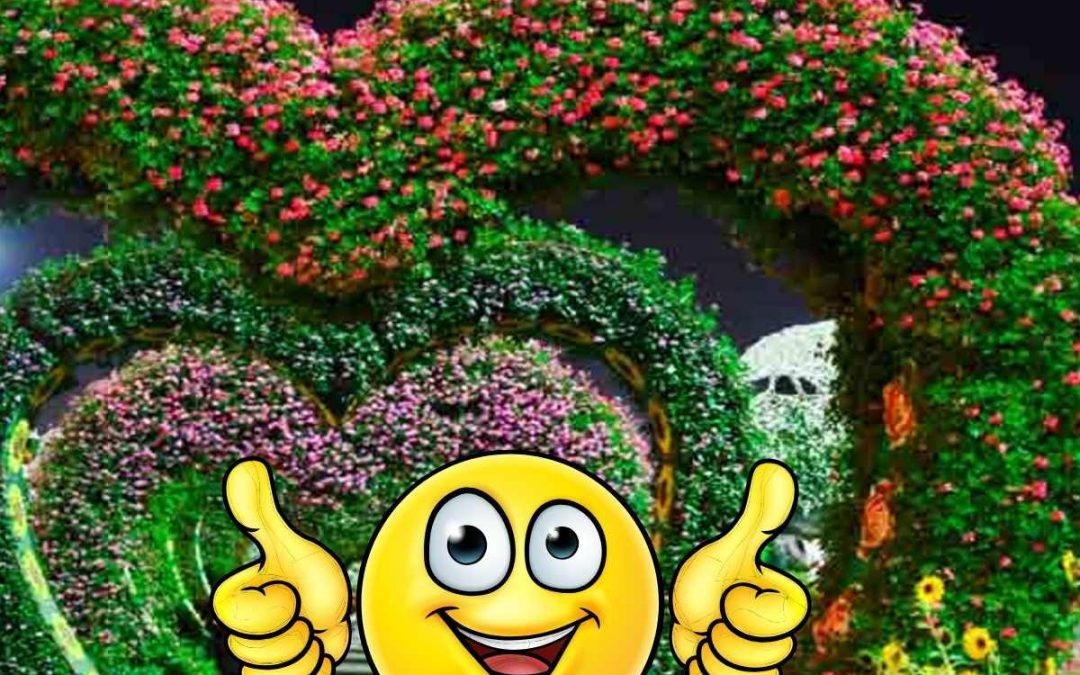 Szeretem a kertem – Őszi kertek szépségversenye – Online játék