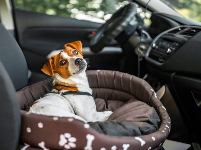 Hogyan vegyünk ma autót?